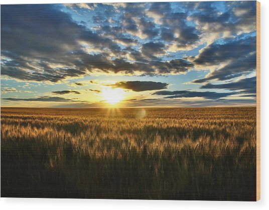 Sunrise On The Wheat Field Wood Print
