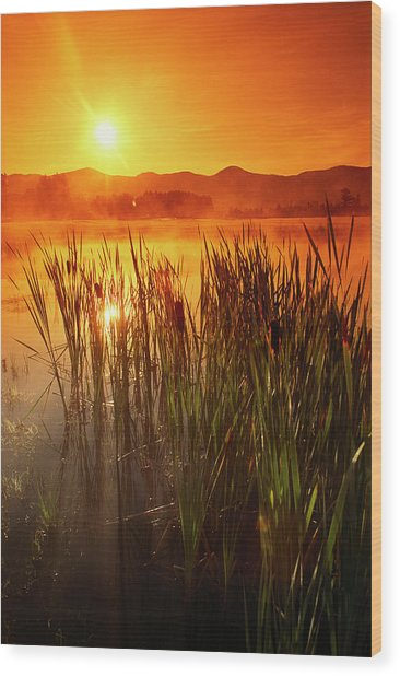 Sunrise Over A Misty Pond Wood Print by Richard Nowitz