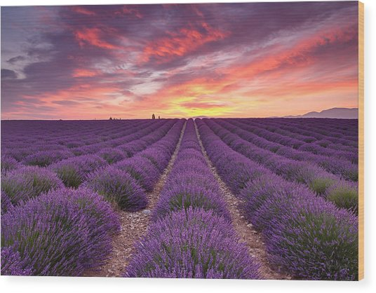 Sunrise Over Lavender Wood Print