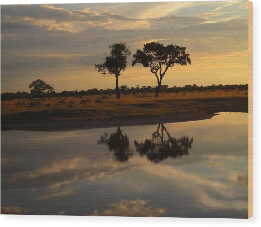 Sunrise Over Savuti Park Wood Print