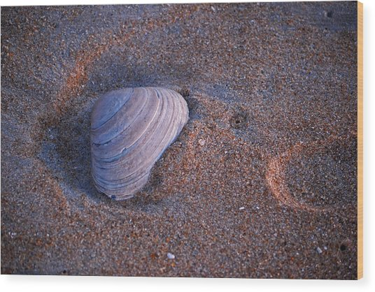 Sunrise Shell Wood Print