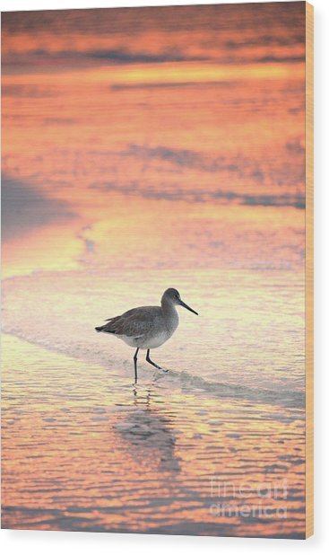 Sunrise Shorebird Wood Print