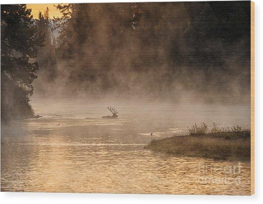 Sunrise Swim Wood Print