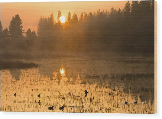 Sunrise Take Off Wood Print