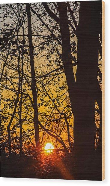 Sunrise Through Trees Wood Print