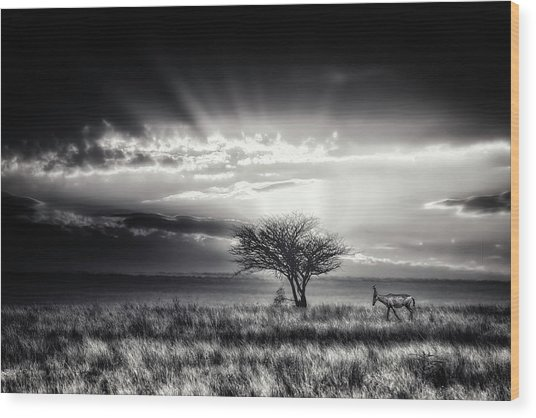 Sunrise With Hartebeest Wood Print by Piet Flour