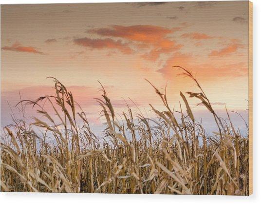 Sunset Against The Cornstalks Wood Print