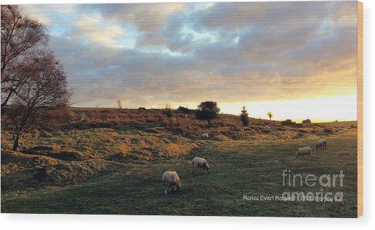 Sunset And Sheep Wood Print by Merice Ewart