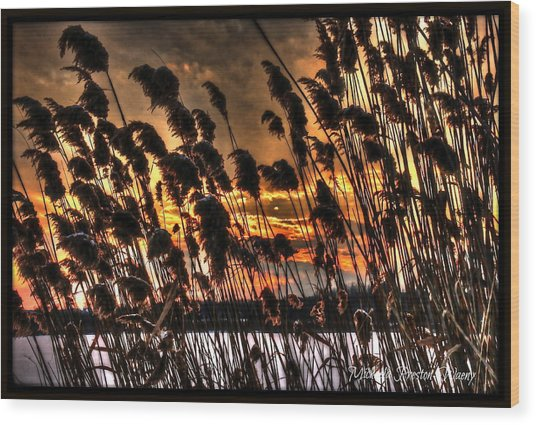 Sunset At The Pond 5 Wood Print