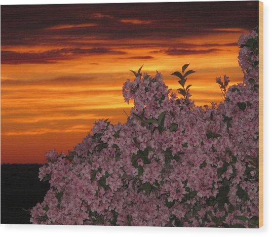 Sunset Blooms Wood Print