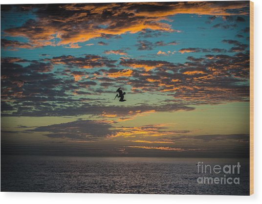 Sunset Dive Wood Print