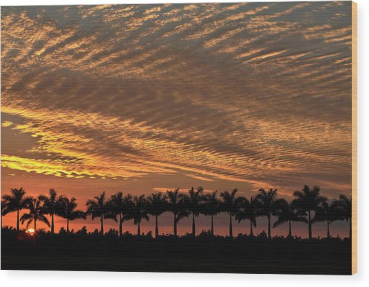 Sunset Florida Wood Print