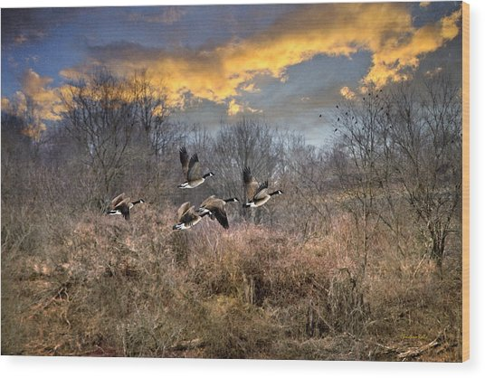 Sunset Geese Wood Print