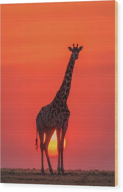 Sunset Giraffe Wood Print by Henry Zhao