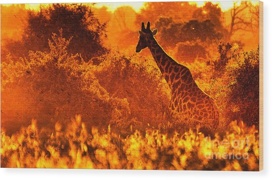 Sunset Giraffe Wood Print