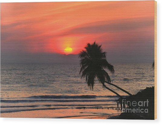 Sunset   Gulf Of Mexico   Naples  Florida Wood Print