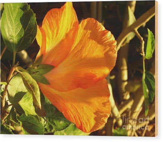 Sunset Hibiscus Wood Print
