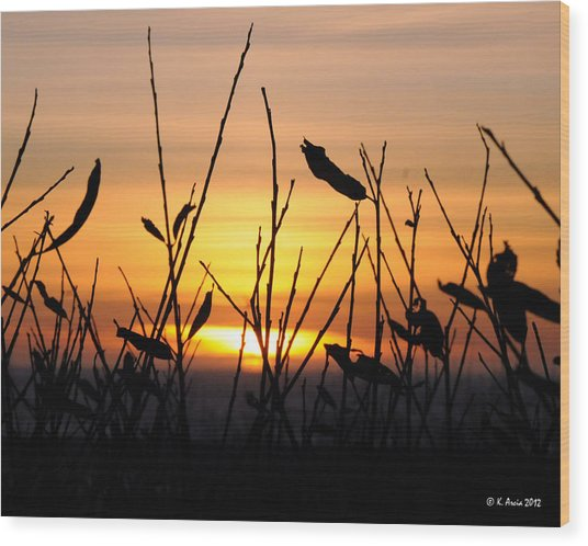 Sunset In Half Moon Bay Wood Print