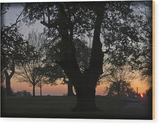 Sunset In Richmond Park Wood Print