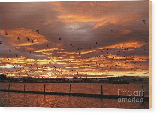 Sunset In Tauranga New Zealand Wood Print