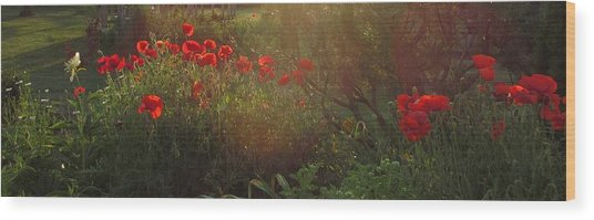 Sunset In The Poppy Garden Wood Print