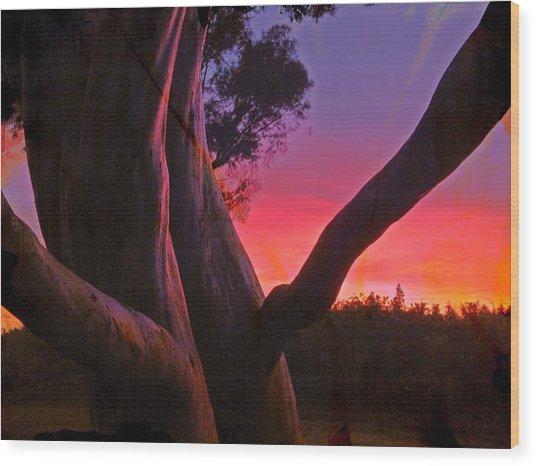 Sunset Madrone 3 Wood Print