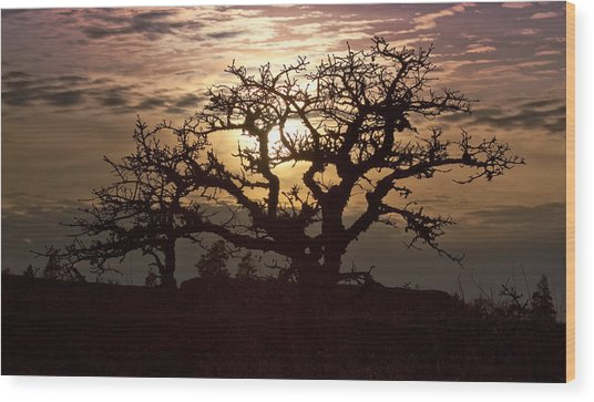 Sunset Oak Wood Print