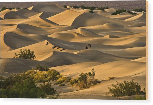 Sunset Over Mesquite Flat Dunes Wood Print