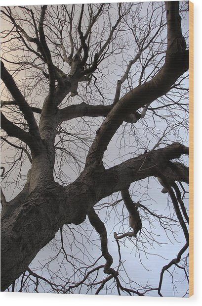 Sunset Skeleton Tree Wood Print by Michel Mata