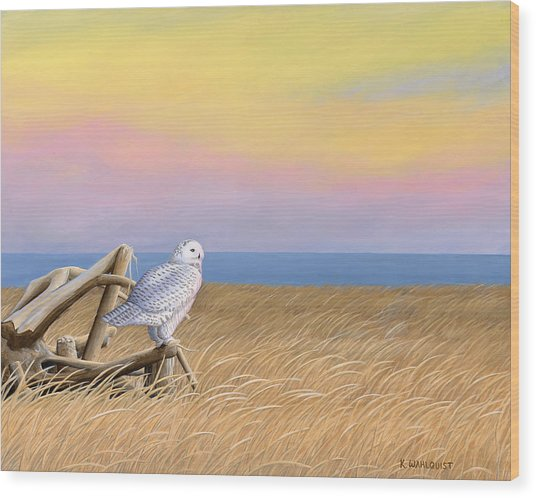 Sunset Snowy Owl Wood Print by Kirsten Wahlquist