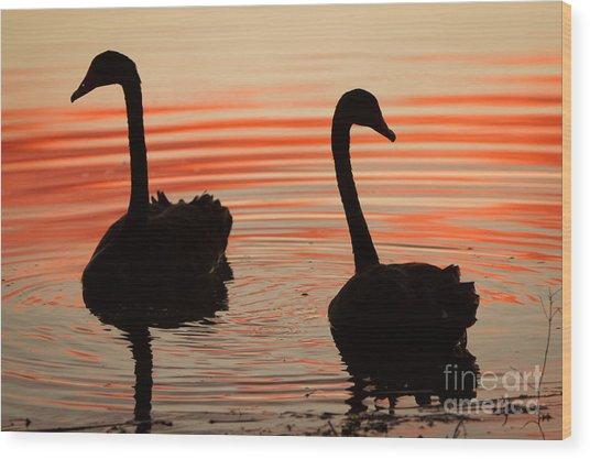 Sunset Swans Wood Print