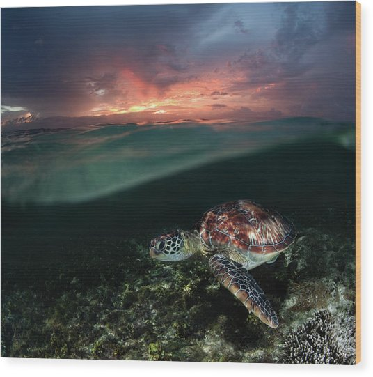 Sunset Swim Wood Print by Andrey Narchuk