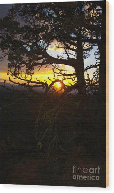 Sunset Through Branch Wood Print