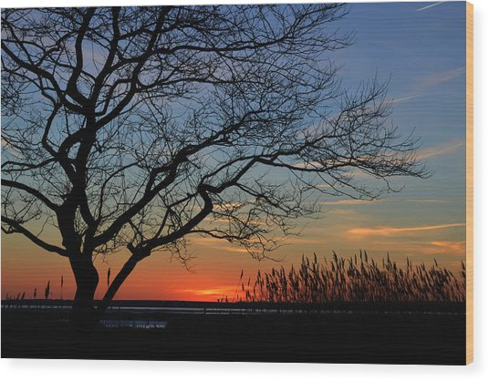 Sunset Tree In Ocean City Md Wood Print
