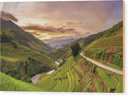 Sunset View Point Of Rice Terrace Wood Print by Suttipong Sutiratanachai