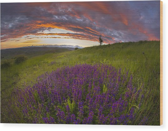 Sunset With Lavender Wood Print by Ovidiu Caragea