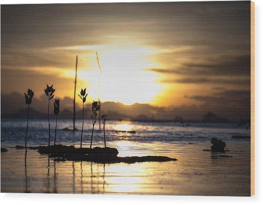 Sunset Wood Print by Zestgolf