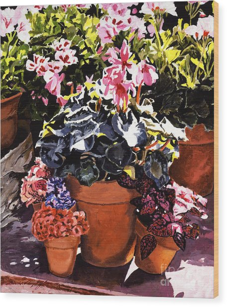 Sunshine And Flowerpots Wood Print by David Lloyd Glover