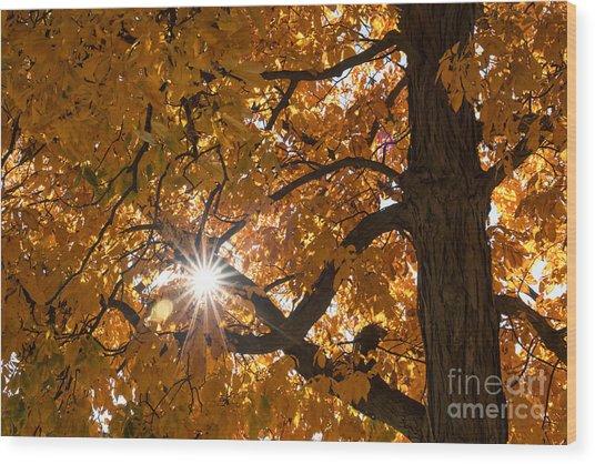 Sunshine Gold Wood Print