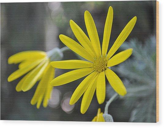 Sunshine In A Flower Wood Print