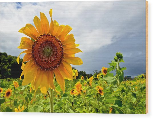 Sunshine On A Cloudy Day Wood Print