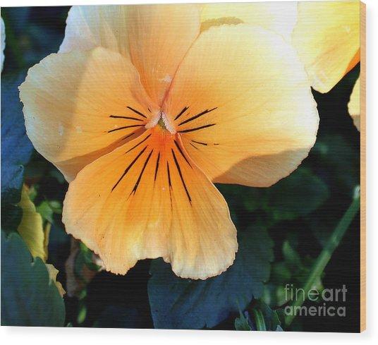 Sunshine Yellow Pansy Wood Print