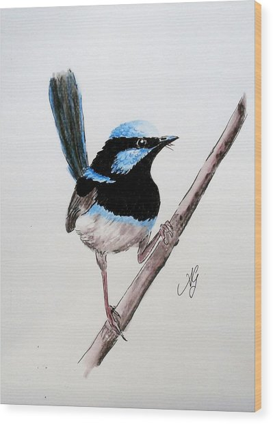 Superb Fairy Wren Wood Print