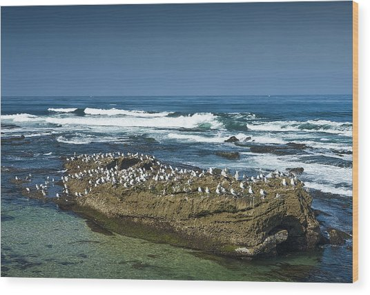 Surf Waves At La Jolla California With Gulls Perched On A Large Rock No. 0194 Wood Print