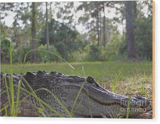 Surprise Alligator Houseguest Wood Print
