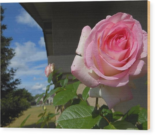 Surreal Rose Wood Print