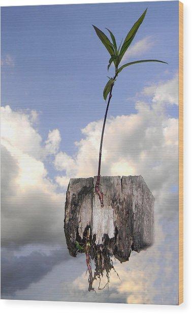 Survival 2 Wood Print by Miki TATULESCU