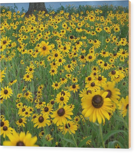 Susans In The Wind Wood Print
