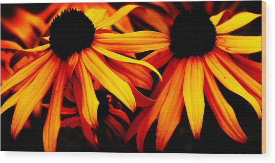 Susans On Fire Wood Print