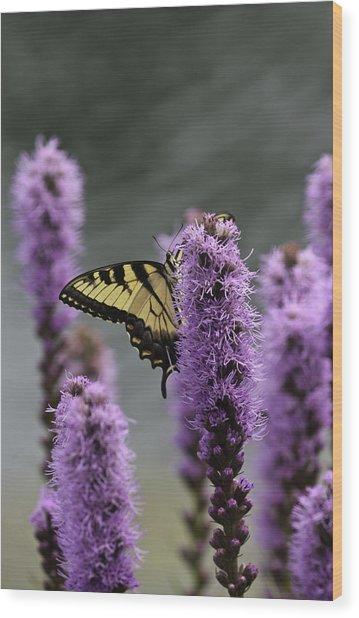 Swallowtail 0003 Wood Print